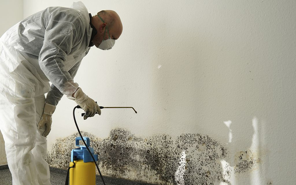 Mold Removal: Remove Mold From Anywhere